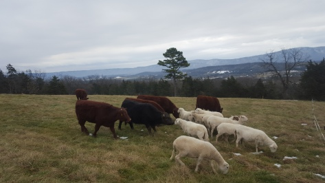 Flock+ Herd=Flerd