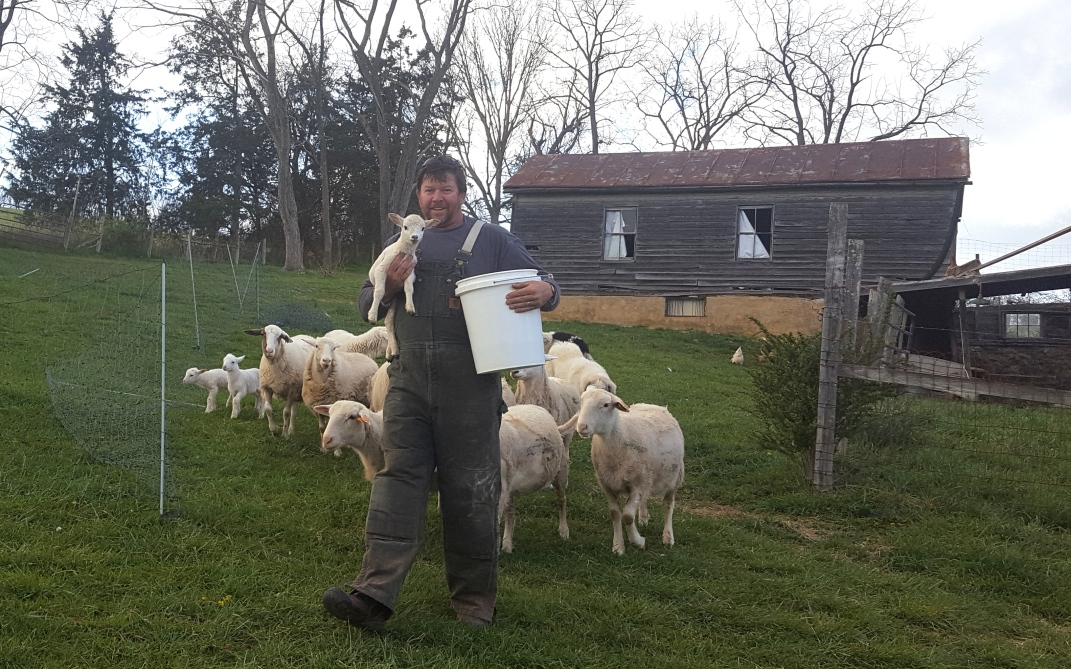 Neil has a soft spot for our lambs