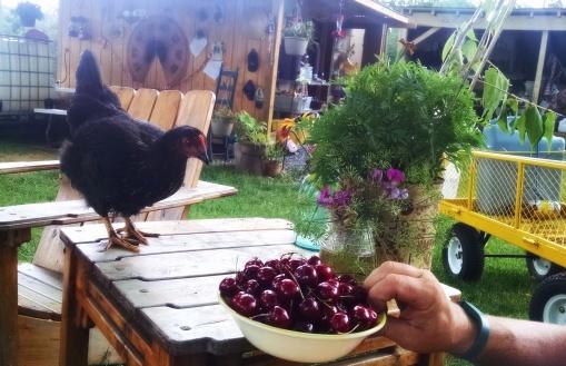 Josephine sneaking cherries